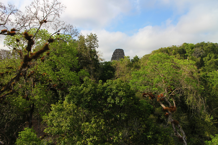 Temples rising up through the jungle at Tikal