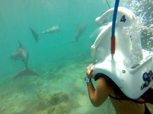 Sea Trek Dolphin Cove Ocho Rios