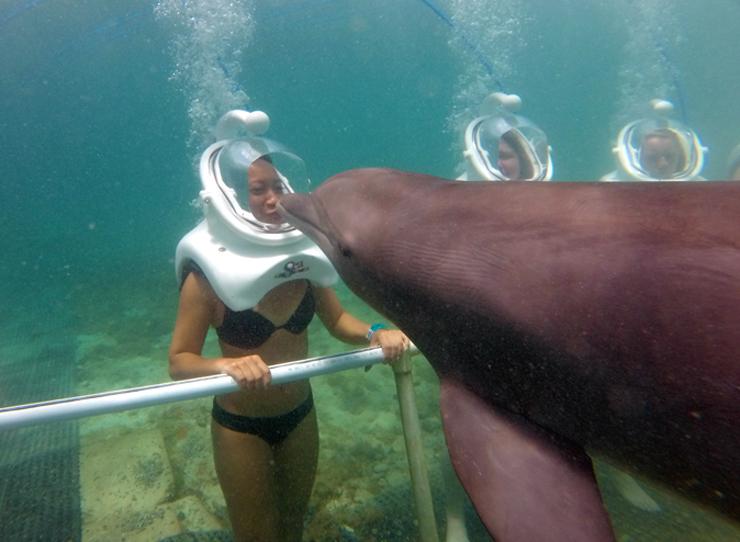 Sea Trek Dolphin Cove Ocho Rios