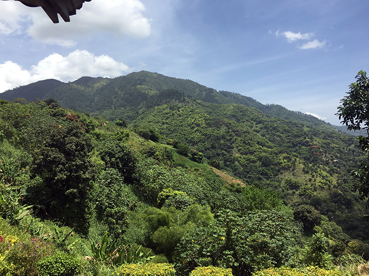 The Blue Mountains in Jamaica