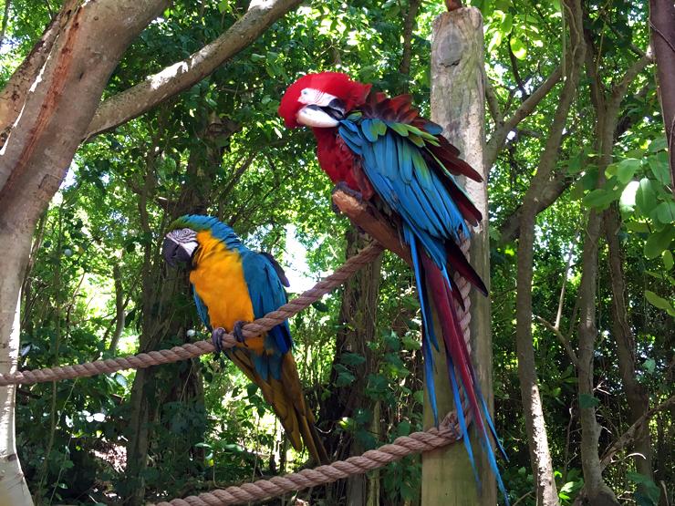 Parrots Dolphin Cove Ocho Rios