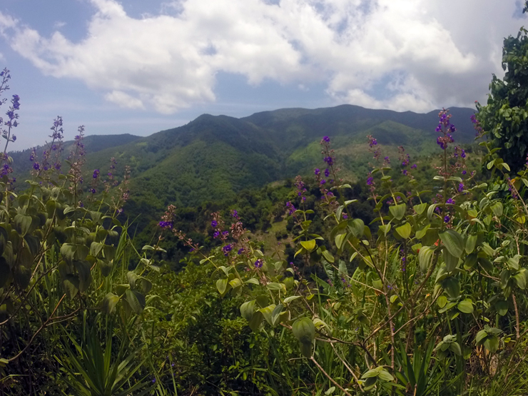 Blue Mountain, Bicycle Tour, Jamaica
