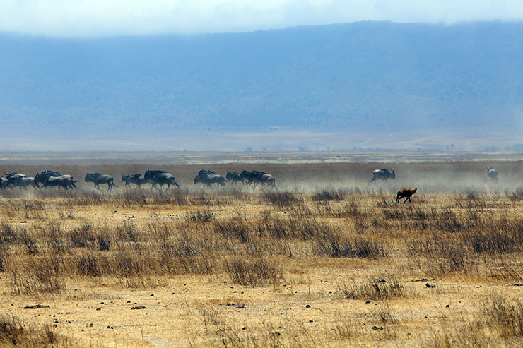 acacia farm lodge, Tanzania, Karatu, Ngorongoro, Ngorongoro crater, safari, napanda safaris, Lake Mantra, Serengeti