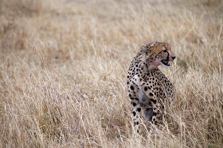 Julia's River Camp, masai mara, kananga international, safari
