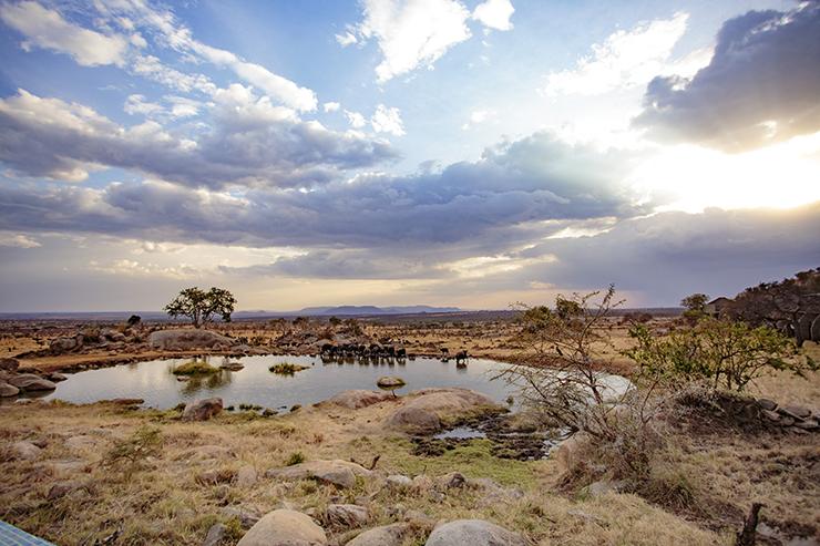 Four Seasons Serengeti, Serengeti National Park, East Africa, Infinity Pool, Tanzania, FSSafari, MyFSSafari, watering hole