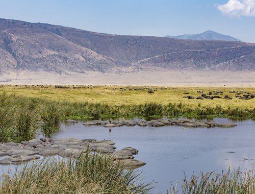 Ngorongoro Crater, Serengeti, Tanzania,