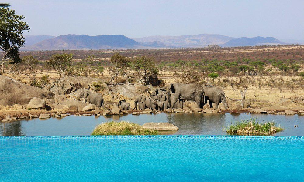 Four Seasons Serengeti Safari, honeymoon